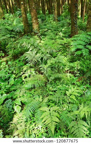 Green fern in tropical forest