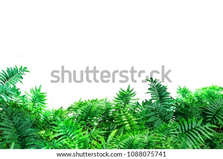 Green fern leaf on White background and Clipping path #1088075741