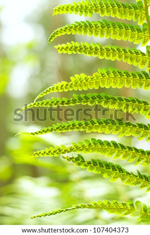 Green Fern Leave on green forest background