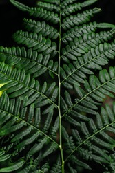 Green fern tree growing in summer. Fern with green leaves on natural background. Natural floral fern background on a sunny day. Fern leaves. Screensaver for a smartphone. Copy space