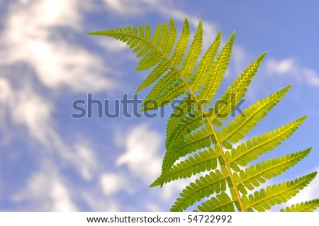 green fern with background of blue sky