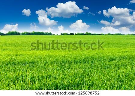 Green field #125898752
