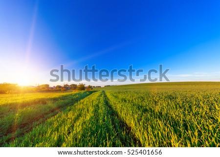 Green Field and Beautiful Sunset #525401656