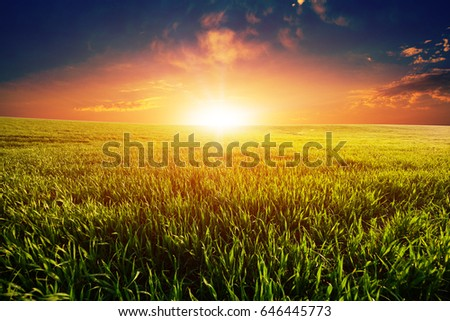 Green Field and Beautiful Sunset #646445773