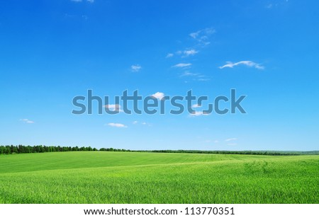green field and blue sky #113770351