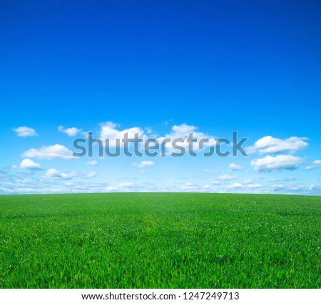 green field and blue sky #1247249713