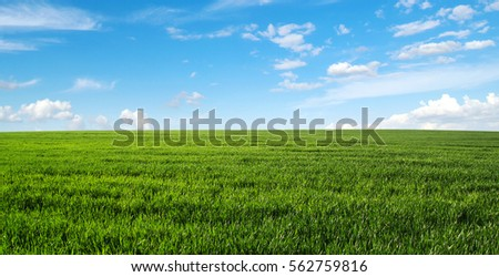 green field and blue sky #562759816