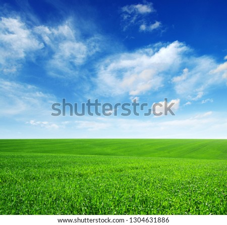 Green field and blue sky with clouds. #1304631886