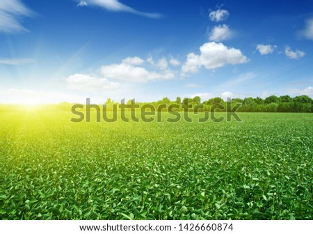 green field and blue sky with clouds #1426660874