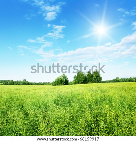 Green field and blue sky with sun.