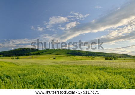 Green field  and bright blue sky #176117675