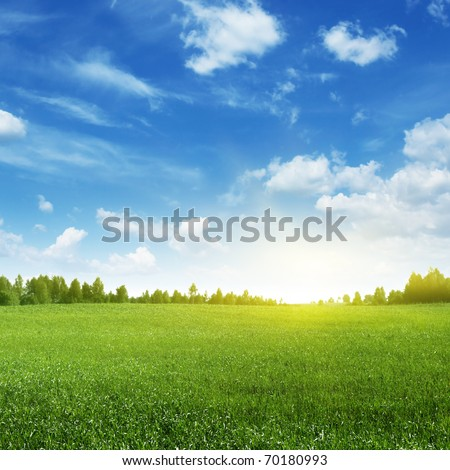 Green field and bright sun.