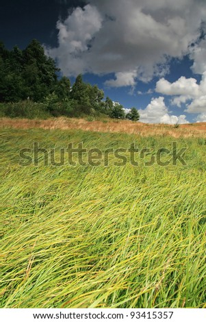 Green field and deep blue sky with clouds