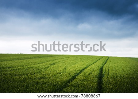 Green field and overcast skies