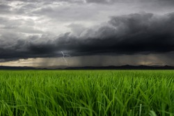 Green field and rain with overcast sky,Green field landscape, Black and White Dark Cloud in Rainy Season, dramatic cloudy sky background, blurred background