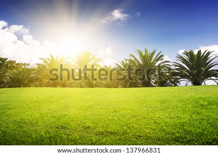 Green field and tropical palm under blue sky. Sunset.