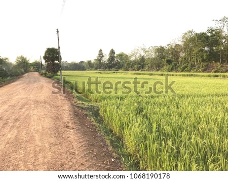 Green field And yellow of rice. The side of the road is a dusty natural landmark that is the landmark of the province. A tourist attraction It is a tourist business. #1068190178