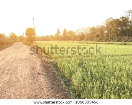 Green field And yellow rice with light flare side, there will be a pathway that is dusty natural land is the province's landmark. A tourist attraction It is a tourist business. #1068305456