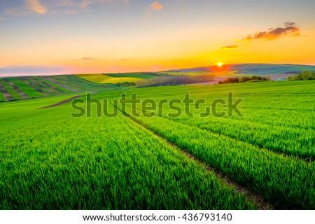 green field at beautiful sunset ...