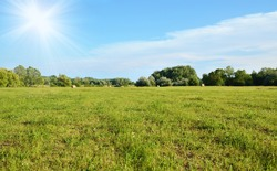 Green field at summer, detail