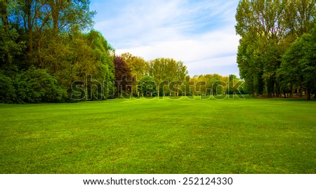 green field. Beautiful Landscape. grass and forest