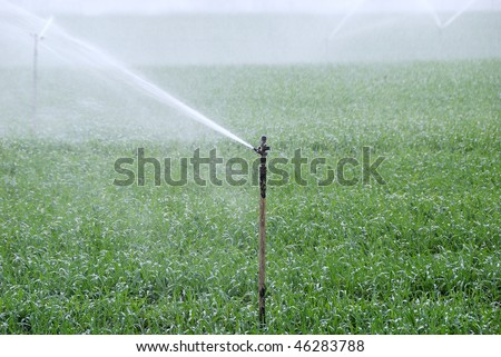 Green field being watered by automatic sprinkler system