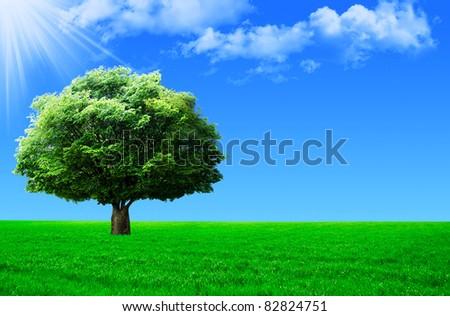 green field, big tree and blue sky