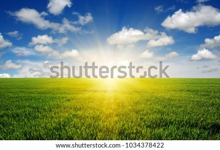 Green field, blue sky and sun.