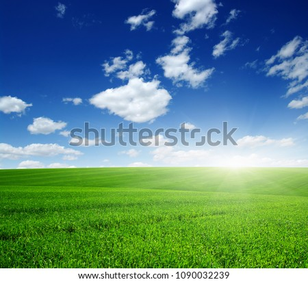 Green field, blue sky and sun.