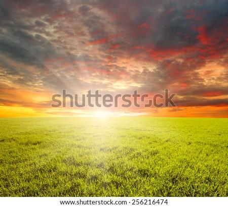 Green field,blue sky and sun.  #256216474