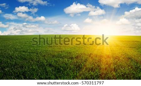 Green field,blue sky and sun.