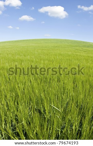 Green field blue sky, summer landscape.
