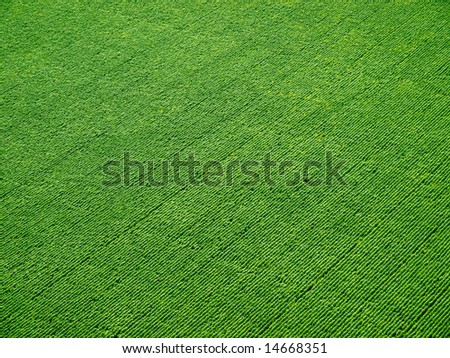 Green field in rows from above (background).