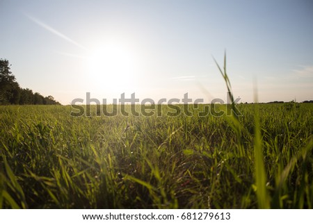 Green field in Russia #681279613