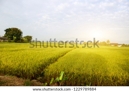 Green field in the morning, the back of small home and mountain. #1229789884