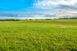 Green field, landscape of meadow with grass and blue sky in spring
