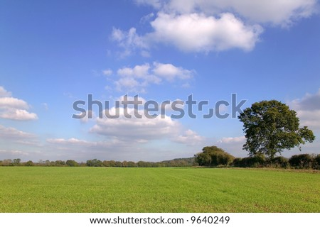Green field landscape under blue cloudy sky on a sunny day.