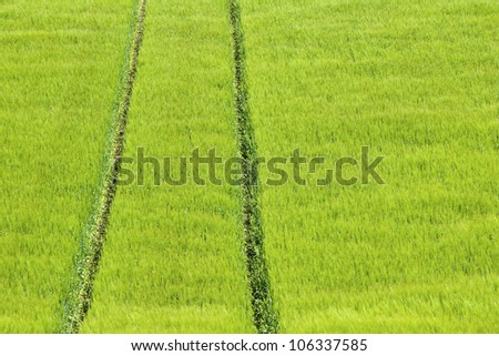 Green field, nature abstract landscape.