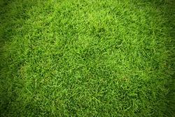Green field of grass background