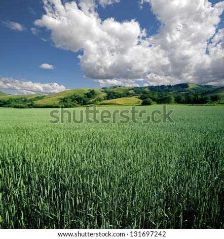 Green field of wheat with hills and blue clouds in Saskatchewan (Qu' Appelle Valley)