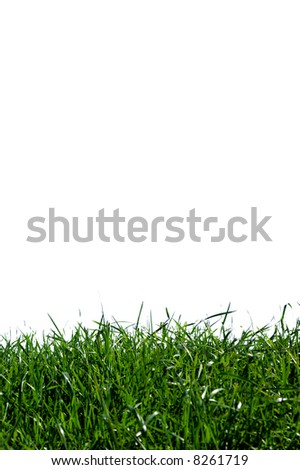 Green field on white background