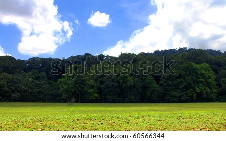 Green Field, Rain Forest and Blue Sky