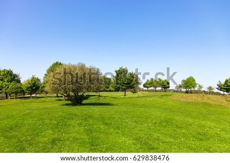Green field, tree and blue sky #629838476