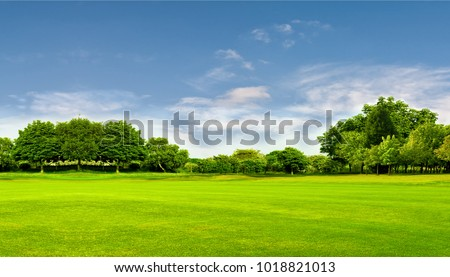 Photo of  Green field, tree and blue sky.Great as a background,web banner