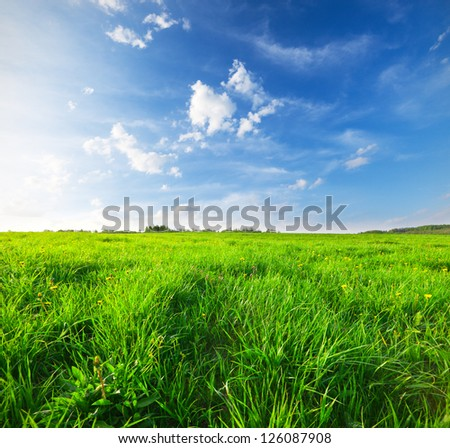 Green field under blue sky