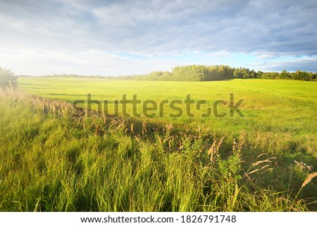 Green field under dramatic clouds. Forest in the background. Idyllic rural scene. Valmiera, Latvia. Nature, seasons, ecology, environmental conservation