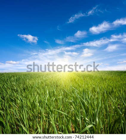 Green field under nice sky