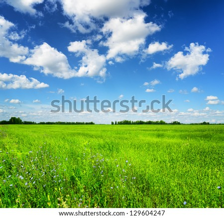 Green field under the blue sky. Summer landscape. - stock photo