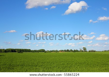 green field with a red barn and a blue sky