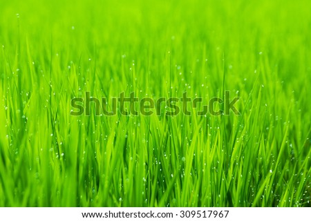 Green field with blur water drop and blur foreground and  blur background